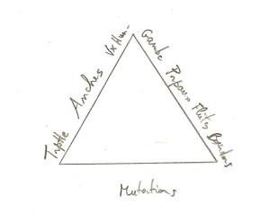 exemple triangle unique cordeau